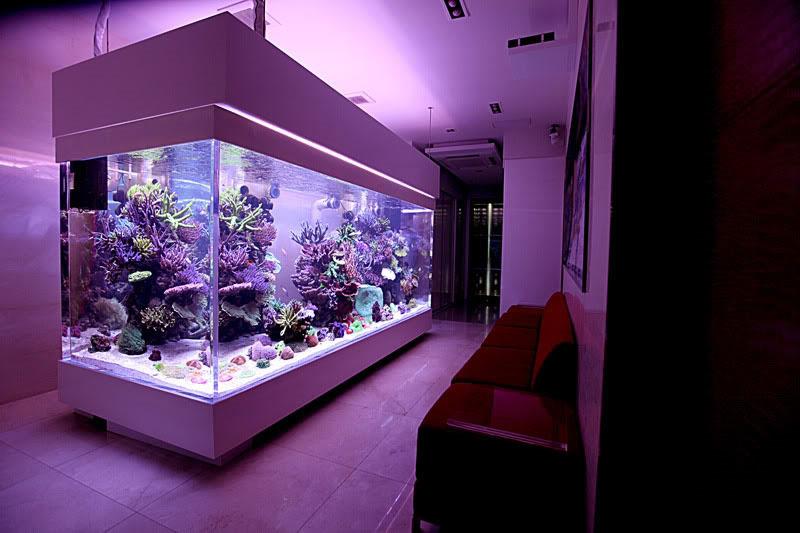 リビングの主役は水槽!海外のデザイナーズ水槽10選!海水魚、珊瑚飼育愛好家の方は必見です!
