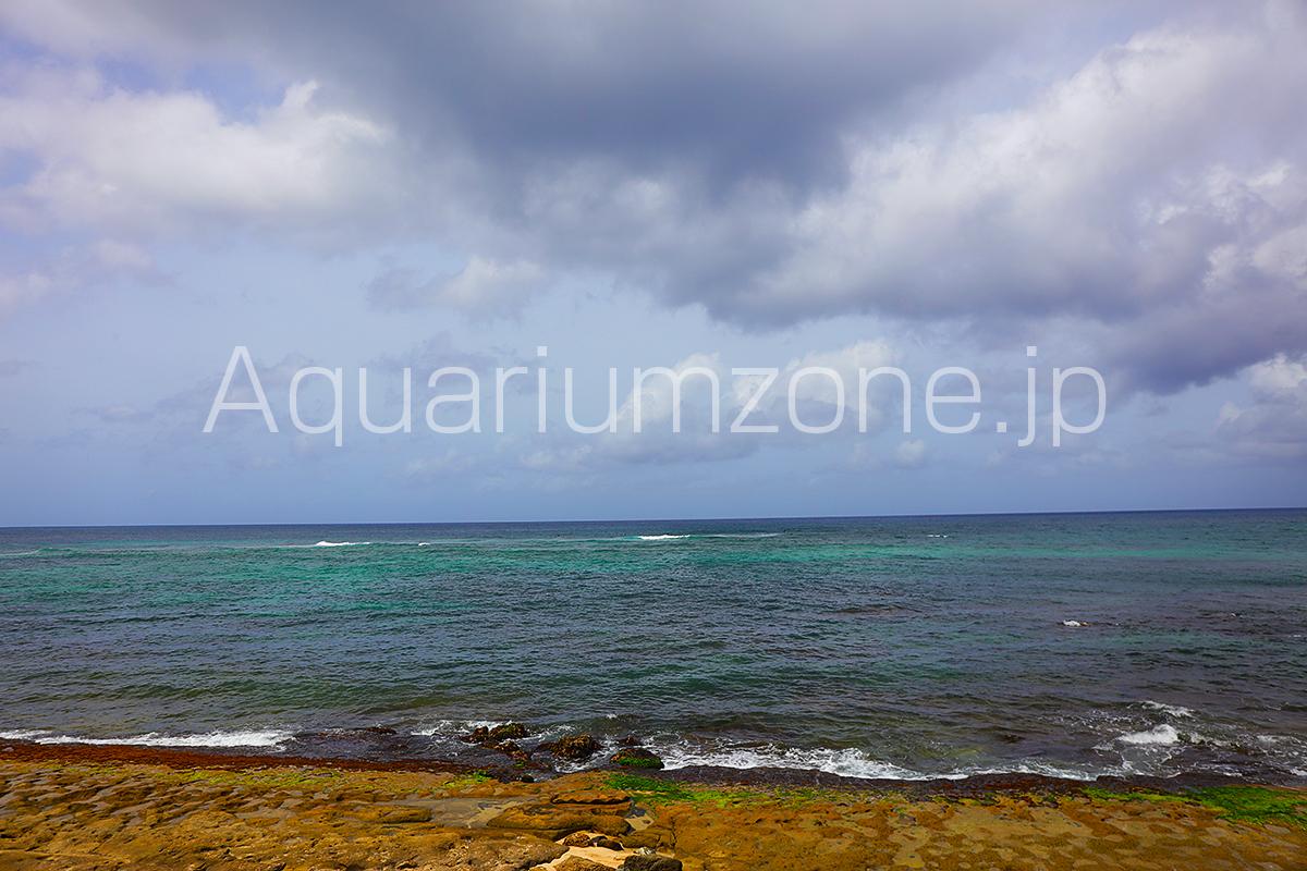 日本に輸入されるハタゴイソギンチャクや珊瑚が育つインドネシアへ行って撮影した現地の海