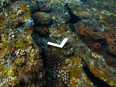 本日6月8日は、ワールドオーシャンズデイ(世界海洋デー)!Google Street Viewが世界40カ所の海中探索画像を公開