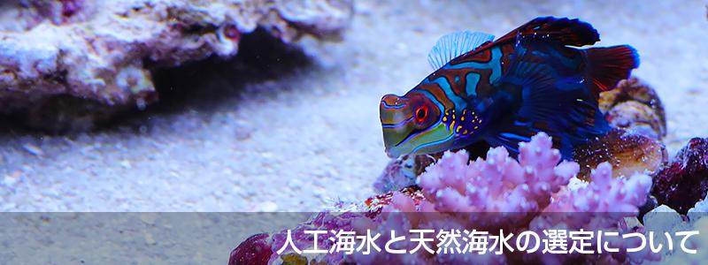 人工海水と天然海水の選定について