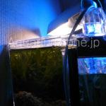 リフジウム水槽内で発生中の微生物(プランクトン)映像