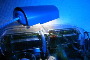 水槽に外掛けできるアクリルケースを利用して安価に作ったリフジウム水槽