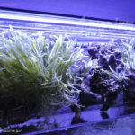 リフジウム水槽はLED照明でも飼育可能