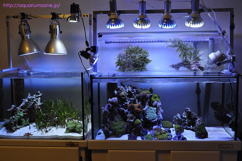 アマモは蛍光灯とLEDでも飼育可能