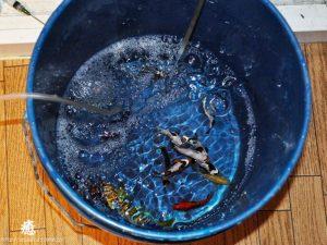 水あわせ中の生体