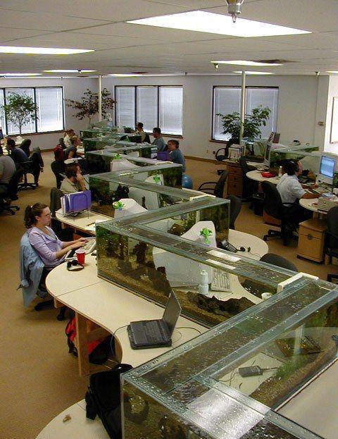 企業への水槽導入事例集。オフィスに癒しの空間をプロデュース。