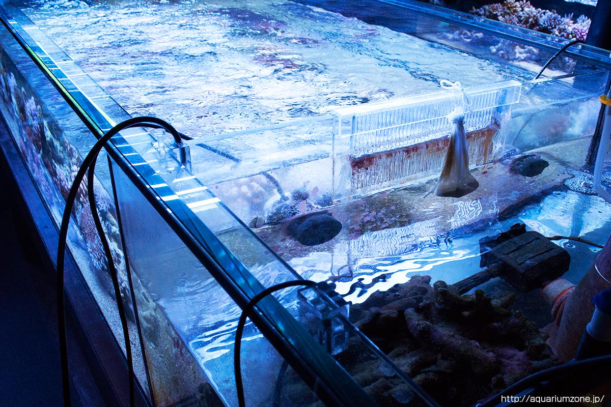 コーラルラボのメイン販売水槽はよく見かけるオーバーフロー水槽では無い?!