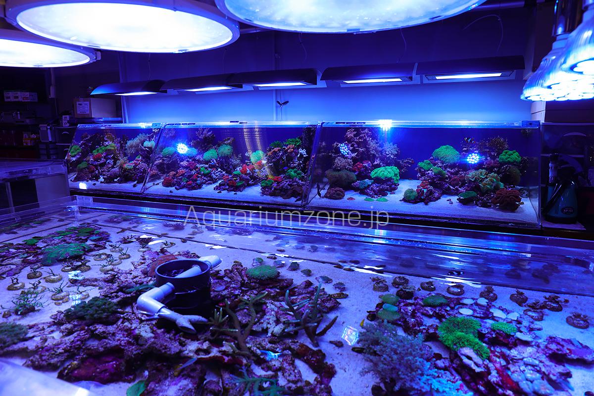 スプラッシュの魅力的なアクリルオーバーフロー水槽の数々