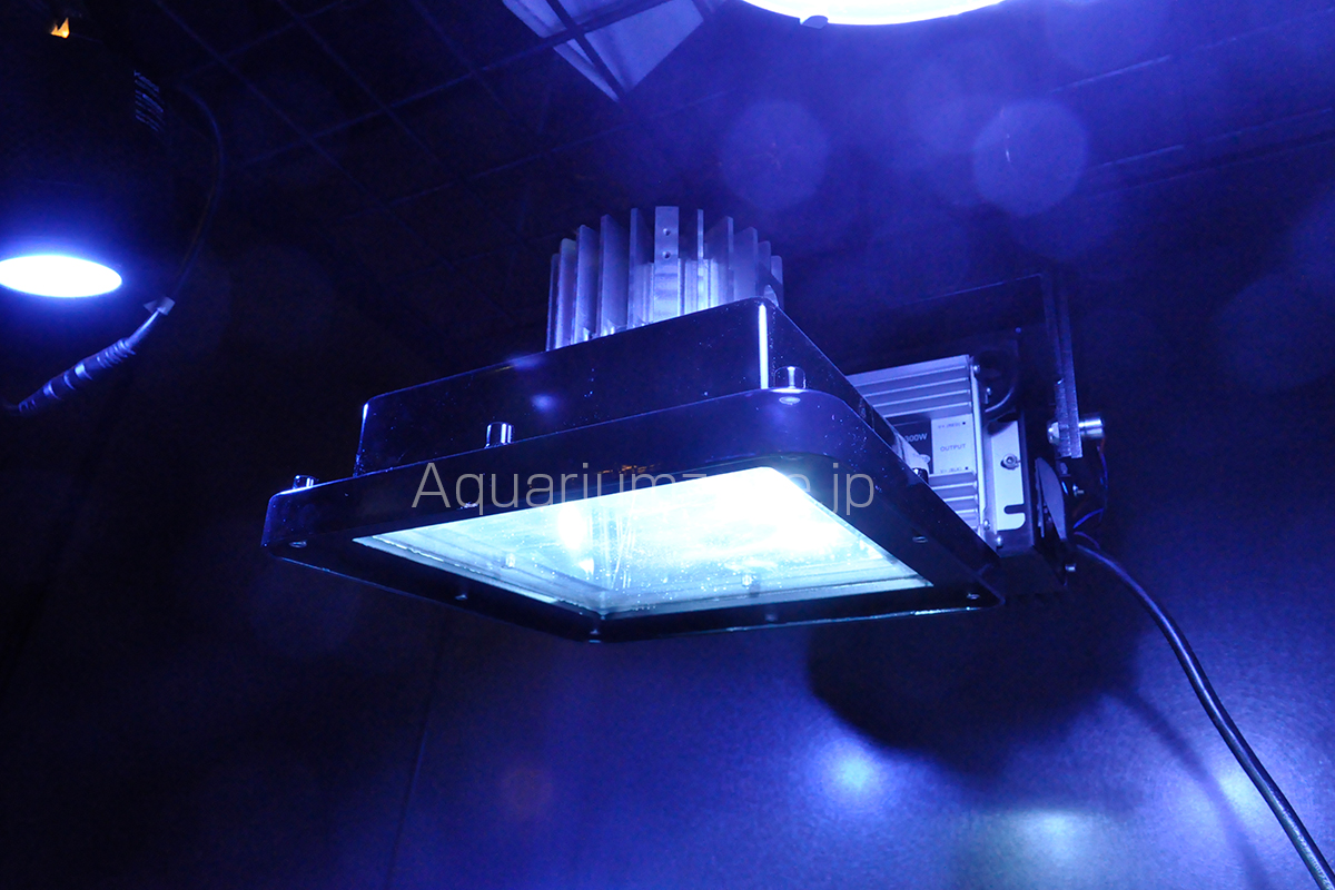 コーラルラボに展示されているプラズマライト