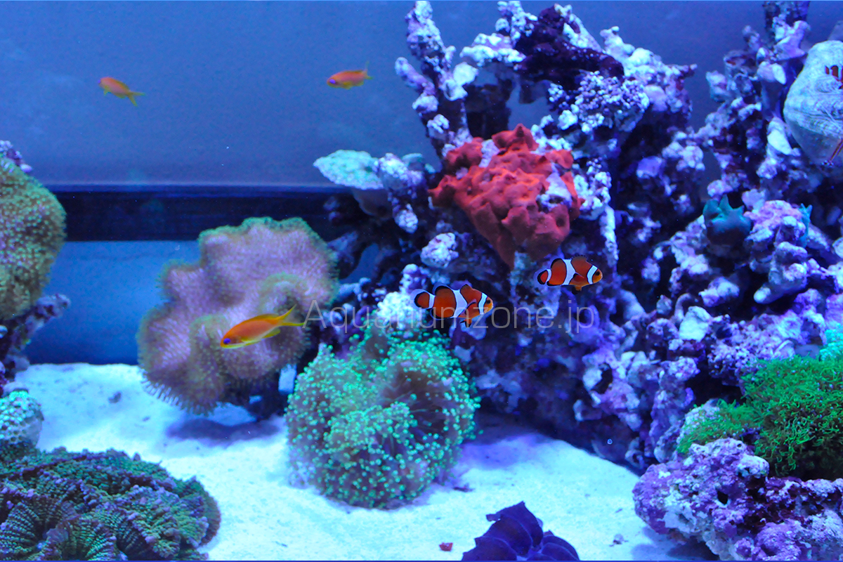 メガバイトは海水魚に最も優れた人工餌