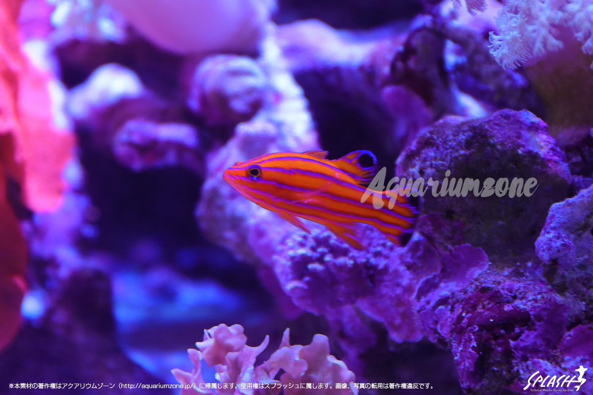珊瑚の撮影に適したカメラについて